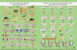 Catalogo Nantlis Vol IM2019 Nantlis Western Wear Productos de Mexico Page 138-139